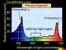 Spectra of Chlorophyll a