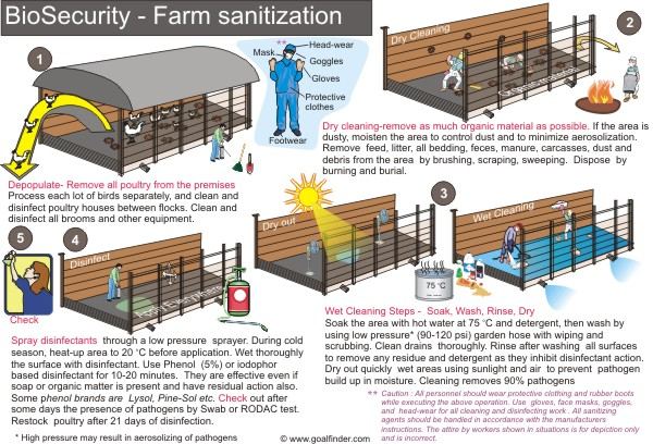 Goalfinder - Posters - Protect poultry from bird flu
