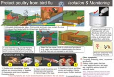 Poster-Practice isolation and monitoring to protect poultry from bird flu