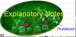 Explanatory notes section explains in detail chloroplast, chlorophyll, glucose etc.