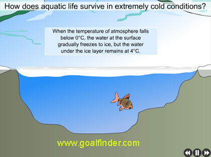 how do fishes survive in a frozen lake - water expands when frozen to ice